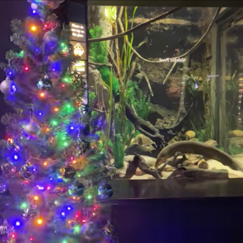 Watch As This Christmas Tree Is Lit Up By An Electric Eel