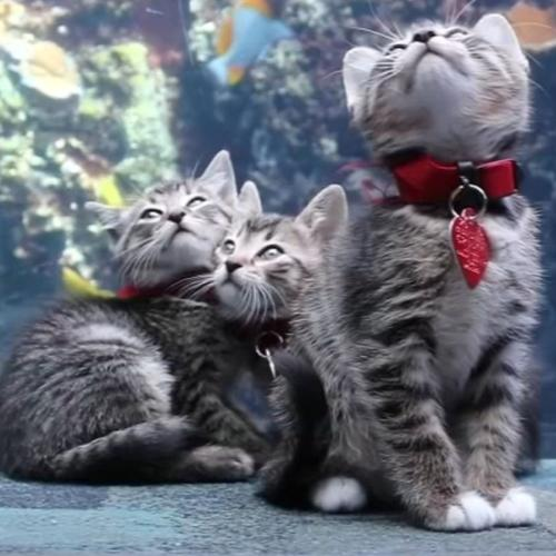 Adorable Kittens Get Private Tour Of Aquarium