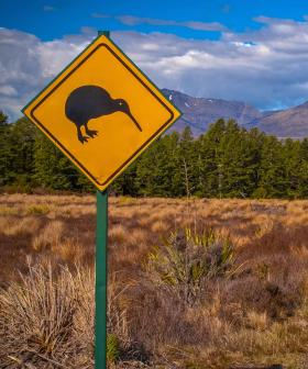 This Is How HUGE Kiwi Birds Can Actually Get And We Still Low-Key Don't Believe It