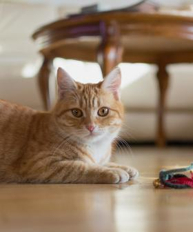 This Canberra Mum Let Her Kids Name The Cat And It Is Hilarious!