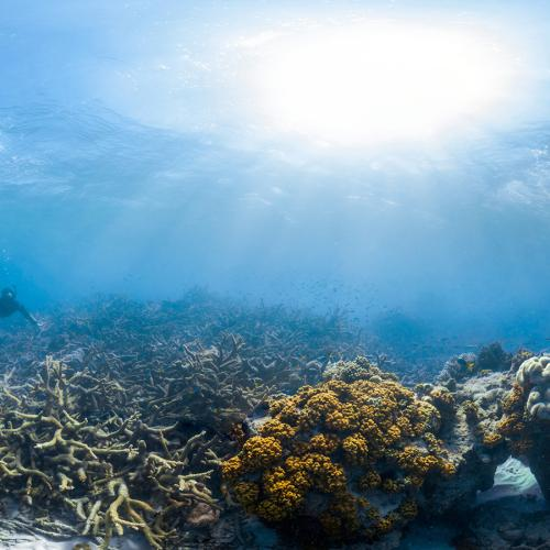 Great Barrier Reef Corals Have Halved Since 1995