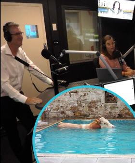 The Breakfast Crew Discuss the LAST Animal You'd Expect To Find In Your Pool