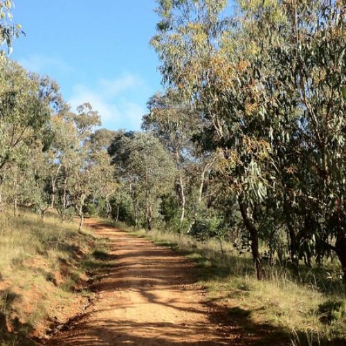 3 Breathtaking Walking Trails in Canberra
