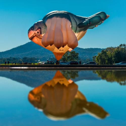 The Skywhale family is growing and taking flight