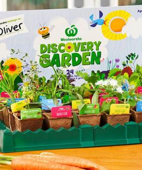 Woolies Mini Collectables Are Back Again, And They're Even Greener This Time Around!