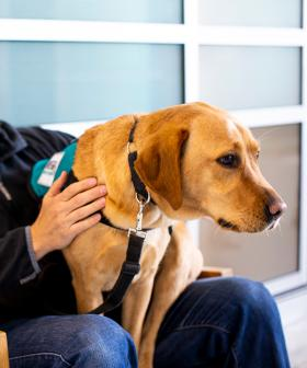Canberra veteran welcomes nation first assistance dog