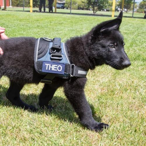 Meet the AFP's newest, goodest boy