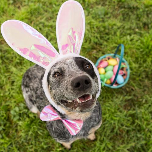 Keeping your furry friends safe this Easter weekend