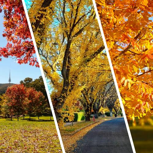 Explore Canberra's best Autumn snaps before Winter arrives