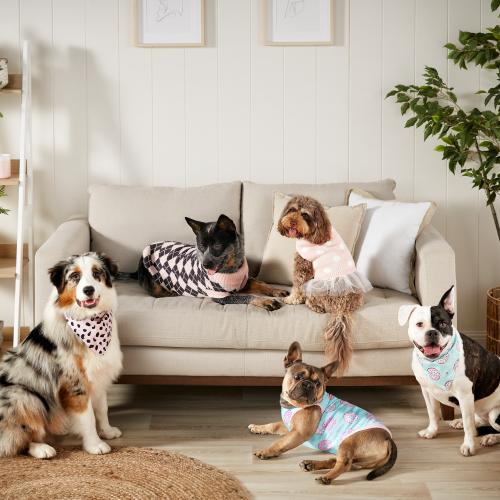Big W Has Released A New Pet Line & You Can Get Your Doggo A TUTU!?