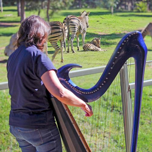 Musical therapy helping comfort creatures at Canberra's Zoo