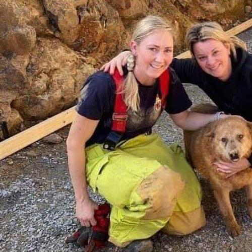 A Pawfect Rescue for Rusty the Red Heeler