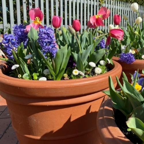 Floriade Bring Some Floral Flare To Suburbs Across Canberra