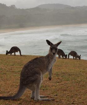 Teens charged with deliberatley killing kangaroos at Batemans Bay